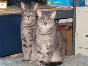 Portrait of Target and Targeretty, the Coney Island Arcade Cats.  Photo © Manny Cohen.