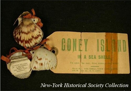 Coney Island Seashell