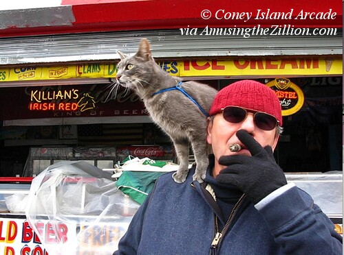Coney Island Cat