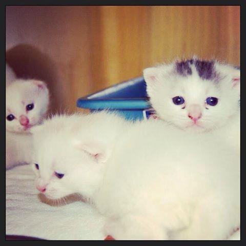 Coney Island Kittens