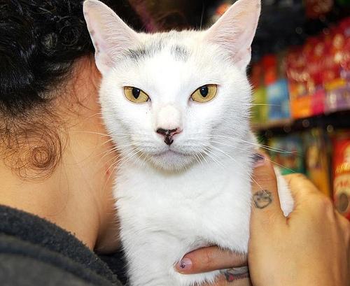 Coney Island Cat