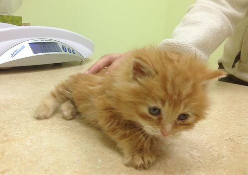 Coney Island Kitten