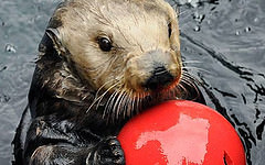 Sea Otter NY Aquarium